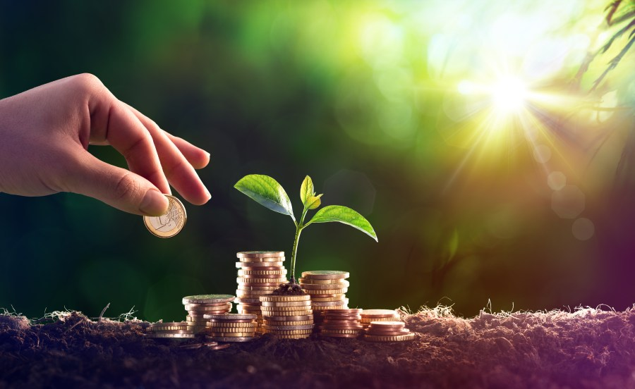 Plant Growing In Savings Coins Money - Investment Concept