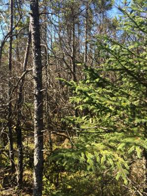 Bog vegetation