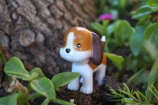 perro-lottie