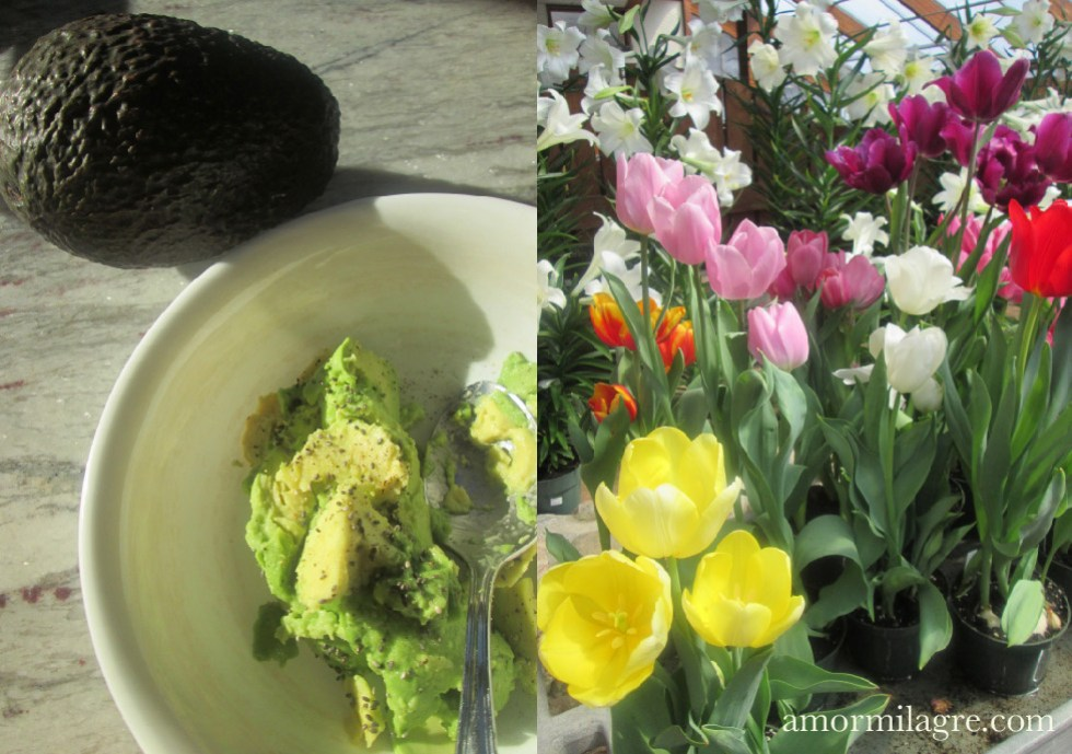 Hummus Recipe and Photography by amormilagre.com Organic, Vegan Vegetarian, Plant-based, Healthy. Artwork, Stationery, Organic Apparel, and Custom Gifts. Avocado, soup, salad, tahini. spring tulip flowers lily local plant nursery Maine