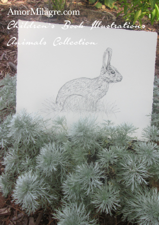 Amor Milagre Children's Book Illustrations Animals Bunny Rabbit in the Grass amormilagre.com