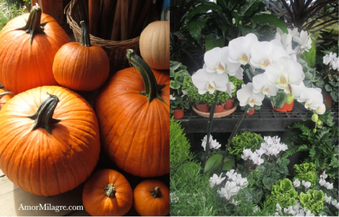 Amor Milagre Autumn Afternoon organic vegan recipe amormilagre.com pumpkins New England in the Fall