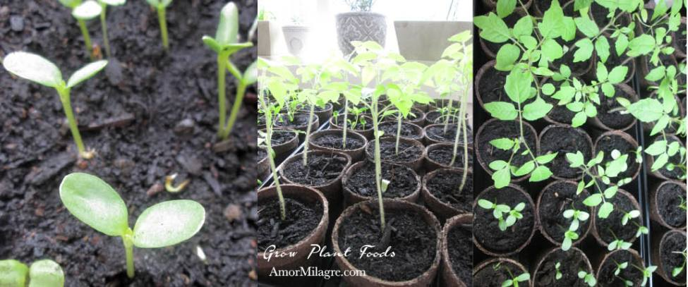 Amor Milagre Grow your Own Fresh Organic Real Plant-Based Food No-Dig Garden 2 Vegan, Art & Design amormilagre