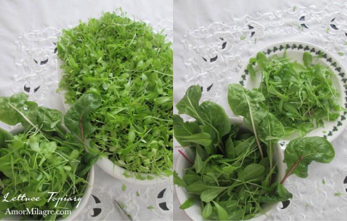 Amor Milagre Lettuce Topiary 1 Easter Egg Organic Garden Spring 2018 Organic Vegan, Art & Design amormilagre.com