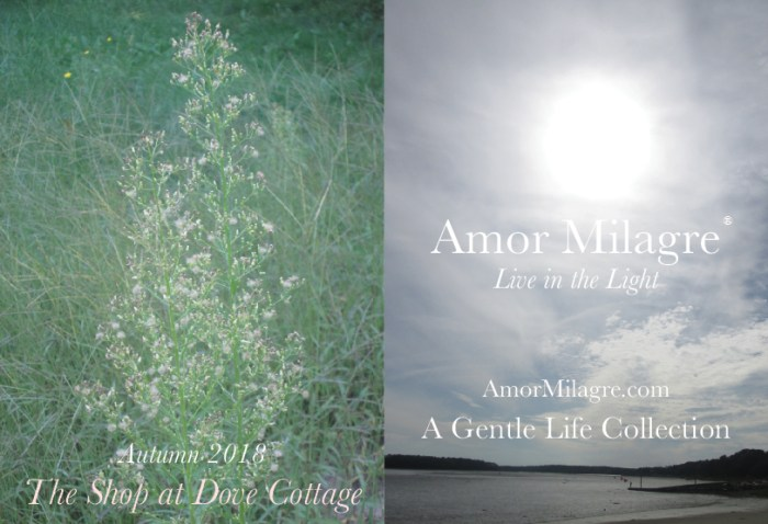 Amor Milagre Fresh Air for Cell Health, Anti-Cancer Diet / Healing Illness Naturally The Shop at Dove Cottage Baby & Child Collection Autumn Fall 2018 Art Design Books Healthy Organic Life Apparel Baby Organic Nursery Toys amormilagre.com