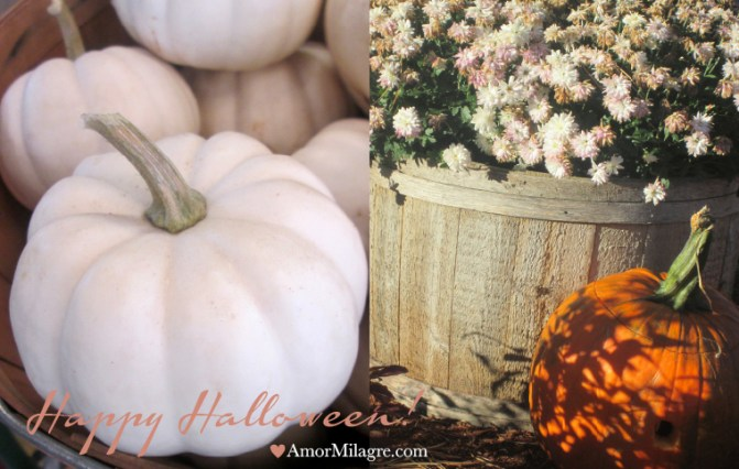 Amor Milagre Happy Halloween Mood 2018 Autumn Fall Trees Pumpkins Art Design Organic Vegan Baby & Child Collection amormilagre.com