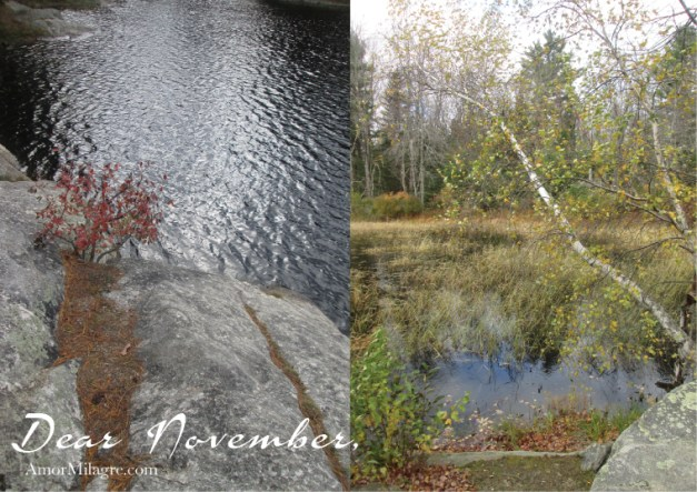 Amor Milagre Dear November, Simplify in Nature, 2018 Autumn Fall Trees Making Time for Nature Art Design Organic Vegan Baby & Child Collection amormilagre.com gooseberries pumpkins landscapes waterscapes