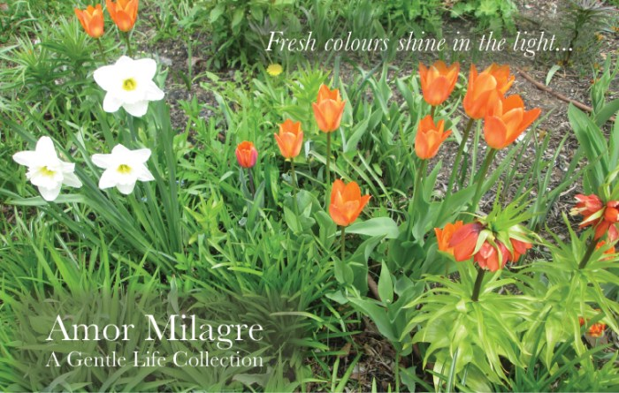 Amor Milagre Art Print SALE! Art Gallery Baby & Child Nursery May Gardening 2019 Spring Orange Tulips White Daffodils colour Flowers Bulbs Ethical Organic Gift Shop Handmade Gift Shop amormilagre.com