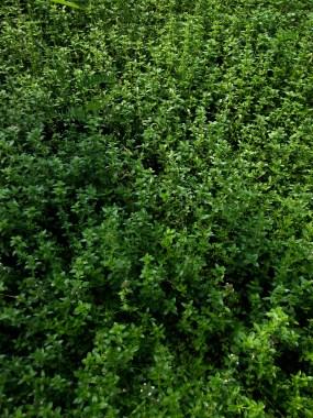 Garden Leaves Shop Background Dark