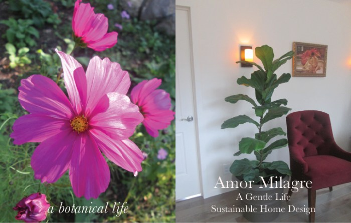 Amor Milagre Custom Built Home Interior Design Moments Goodnight, Dove Cottage 2019 Ethical botanical vegan life cosmos amormilagre.com