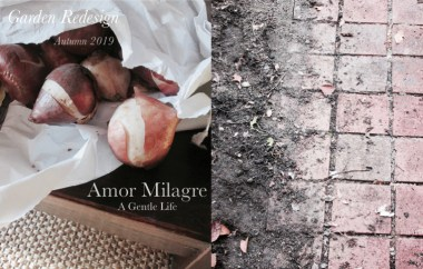 Amor Milagre Home & Garden Renovation Design Diaries & Tips Planting Spring Flower Bulbs & Seeds in Autumn Trees Soil Health Organic Garden Ethical Gift Shop amormilagre.com