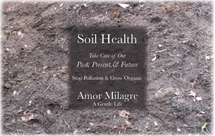 Amor Milagre Home & Garden Renovation Design Diaries & Tips Planting Spring Flower Bulbs & Seeds in Autumn Trees Soil Health Stop Pollution Grow Organic Foods Garden Ethical Gift Shop amormilagre.com