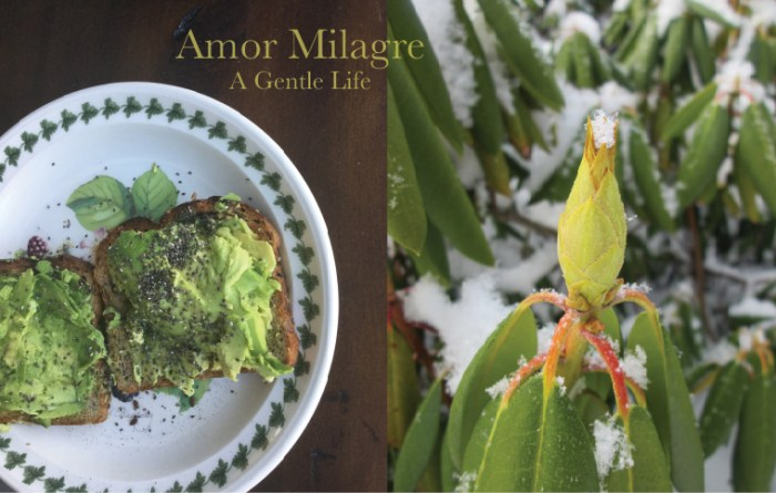 Amor Milagre A Gentle Life Avocado Children and parent lunch recipe organic vegan cookbook snowy flower Gift Shop amormilagre.com
