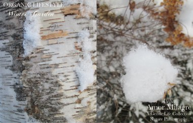 Amor Milagre Birch Bark & Ice Crystals Snowy Winter Garden Nature Photography Organic Lifestyle romantic ethical gifts art prints amormilagre.com