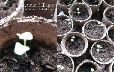 Amor Milagre Organic Seed Planting Staying At Home, Illness Prevention, Spring Cleaning, & Loving Communication During Coronavirus quarantine 2020 Ethical Organic Gift Shop Family amormilagre.com
