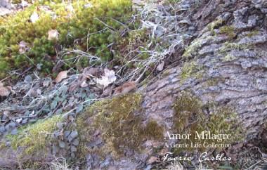 Amor Milagre Faerie Castles Spring Garden Rose Cottage 2020 Ethical Organic Gift Shop amormilagre.com 6