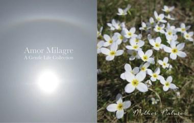 Amor Milagre Happy Mother's Day Nature Spring Garden Rose Cottage 2020 Ethical Organic Gift Shop amormilagre.com