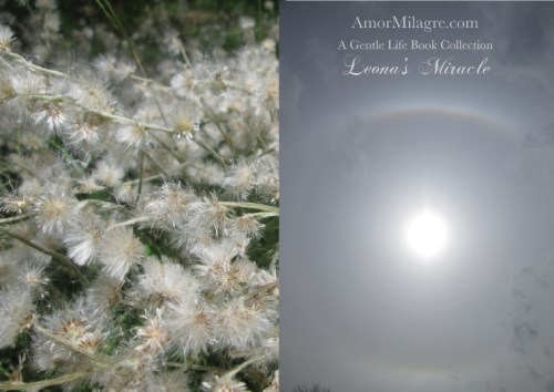 Amor Milagre Leona's Miracle 1st Spring Festival The Love Letter Diaries #4 ethical book series amormilagre.com 14