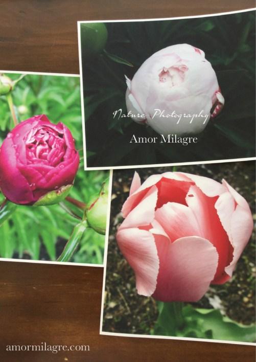Amor Milagre Cottage Garden Flowers Nature Photography Art Print Greeting Card amormilagre.com