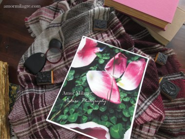 Amor Milagre Fallen Pink Tulip Petals Flower Nature Photography amormilagre.com