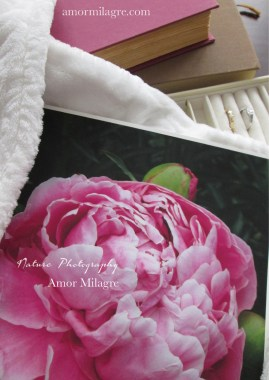 Amor Milagre Pink Peony Flower Bloom nature 1 photography amormilagre.com