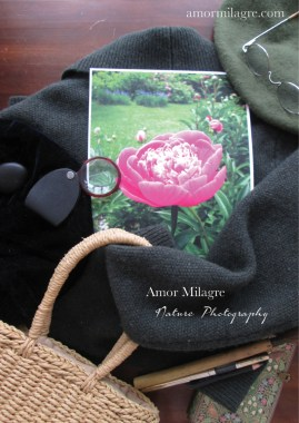Amor Milagre Magenta Peony Flower Garden View nature photography 2 amormilagre.com