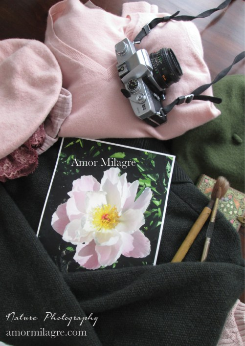 Amor Milagre Sunny Pale Pink Peony Flower Bloom nature photography 1 amormilagre.com