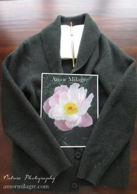 Amor Milagre Soft Pale Pink Peony Flower Bloom nature photography 2 amormilagre.com