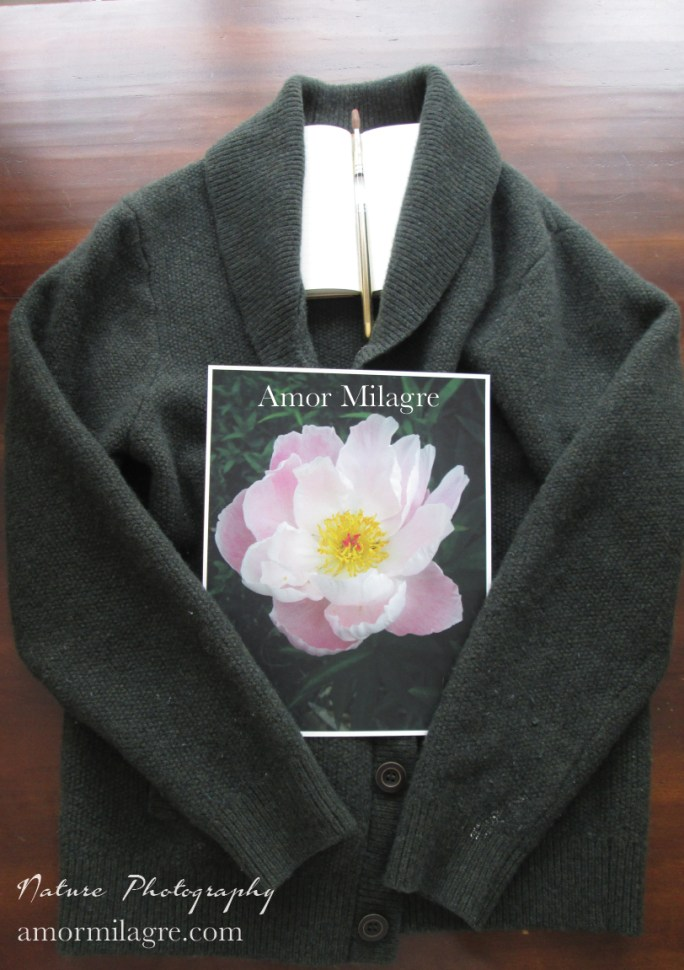 Amor Milagre Soft Pale Pink Peony Flower Bloom nature photography 2 amormilagre.com
