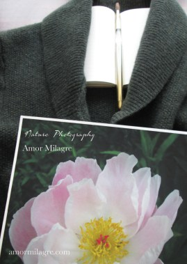 Amor Milagre Sunny Pale Pink Peony Flower Bloom nature photography amormilagre.com