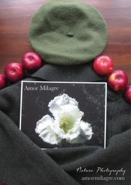 Amor Milagre White Fringed Daffodil Garden Photography Art Print amormilagre.com