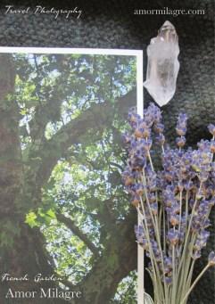 Amor Milagre France Travel Photography Paris Tree Garden Nature Art Print amormilagre.com 3