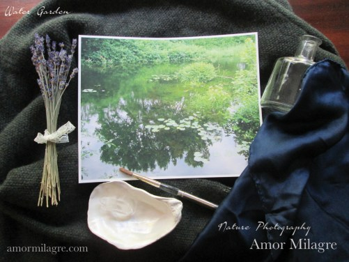 Amor Milagre Water Lily Garden Nature Photography Art Print amormilagre.com 3