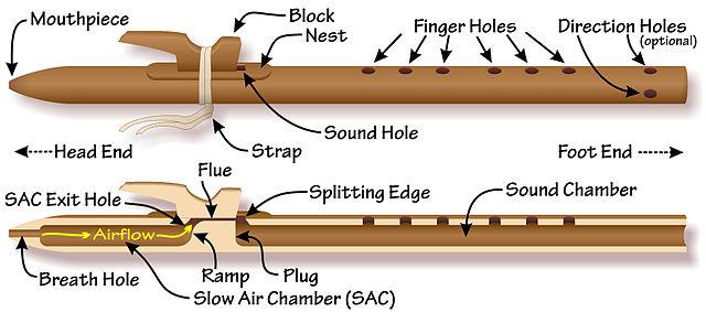 anatomía flauta amaricana