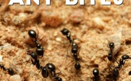 How to naturally get rid of ant beds and naturally treat ant bites. Great read if you have toddlers or preschoolers.
