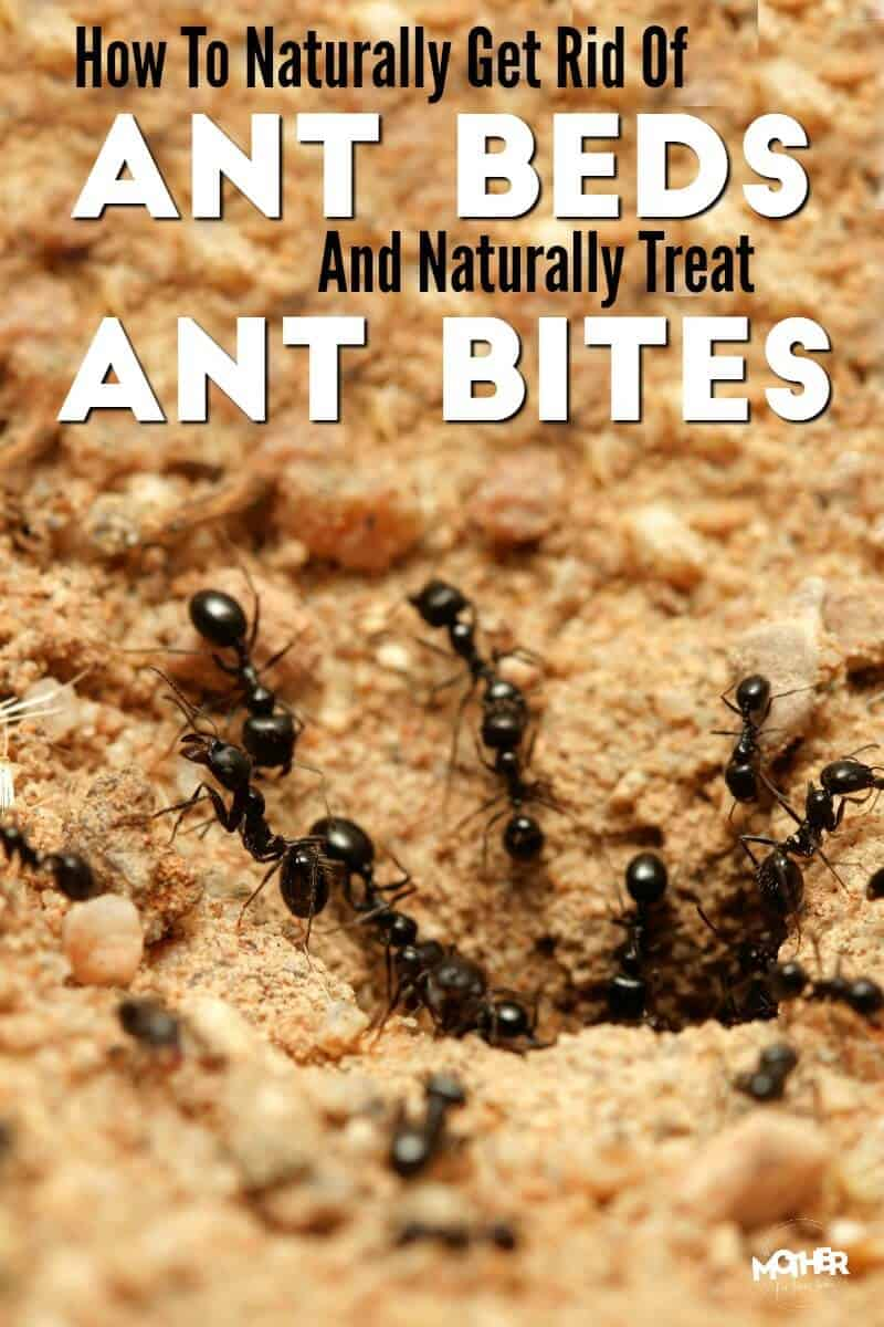 ants crawling into their ant bed