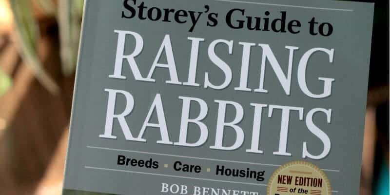 rabbit book for adults