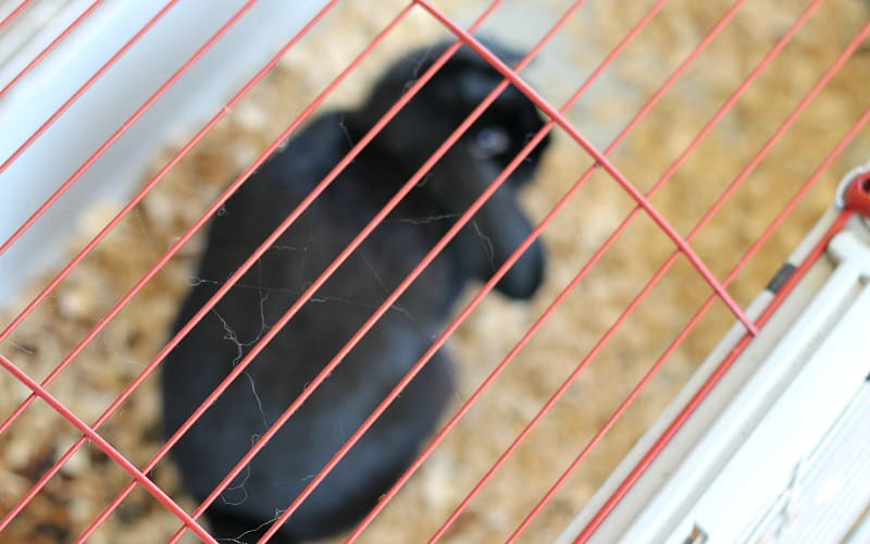 bunny-rabbit-cage