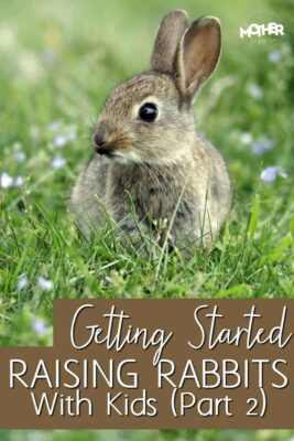 Want to get a rabbit for a pet with your kid? Here is part 2 in my series Getting Started Raising Rabbits with Kids