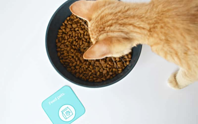 cat eating its food with a printable chore list card beside it on the floor saying feed pets