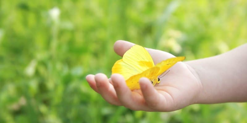 child holding a yellow butterfly