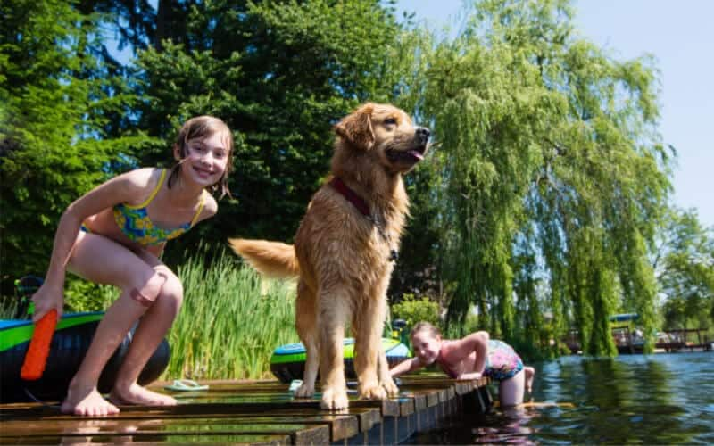 don't overshare your children's lives and photos girl jumping off dock with dog