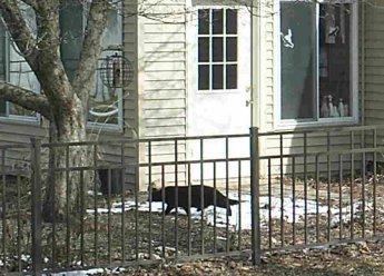 black cat, 9:20 a.m., 17 April 2014