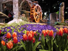 Graystone Masonry: red fringed tulips and purple primrose, waterwheel