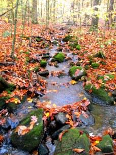 creekmossyrocksfallleavesKHNP18Oct2014