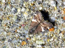 moth (?), 10 April 2014