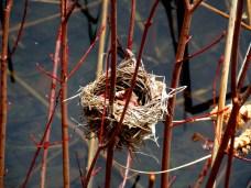 smallbirdsnestbetweentwigsKHNP4May2014