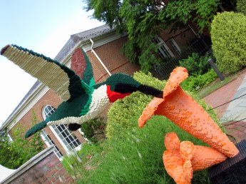 LegohummingbirddGinterRichmond17July2016