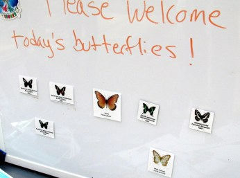 Welcoming newly hatched butterflies!
