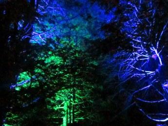 bluegreentreesnearlargelakenightscapelongwoodgardens7aug2015